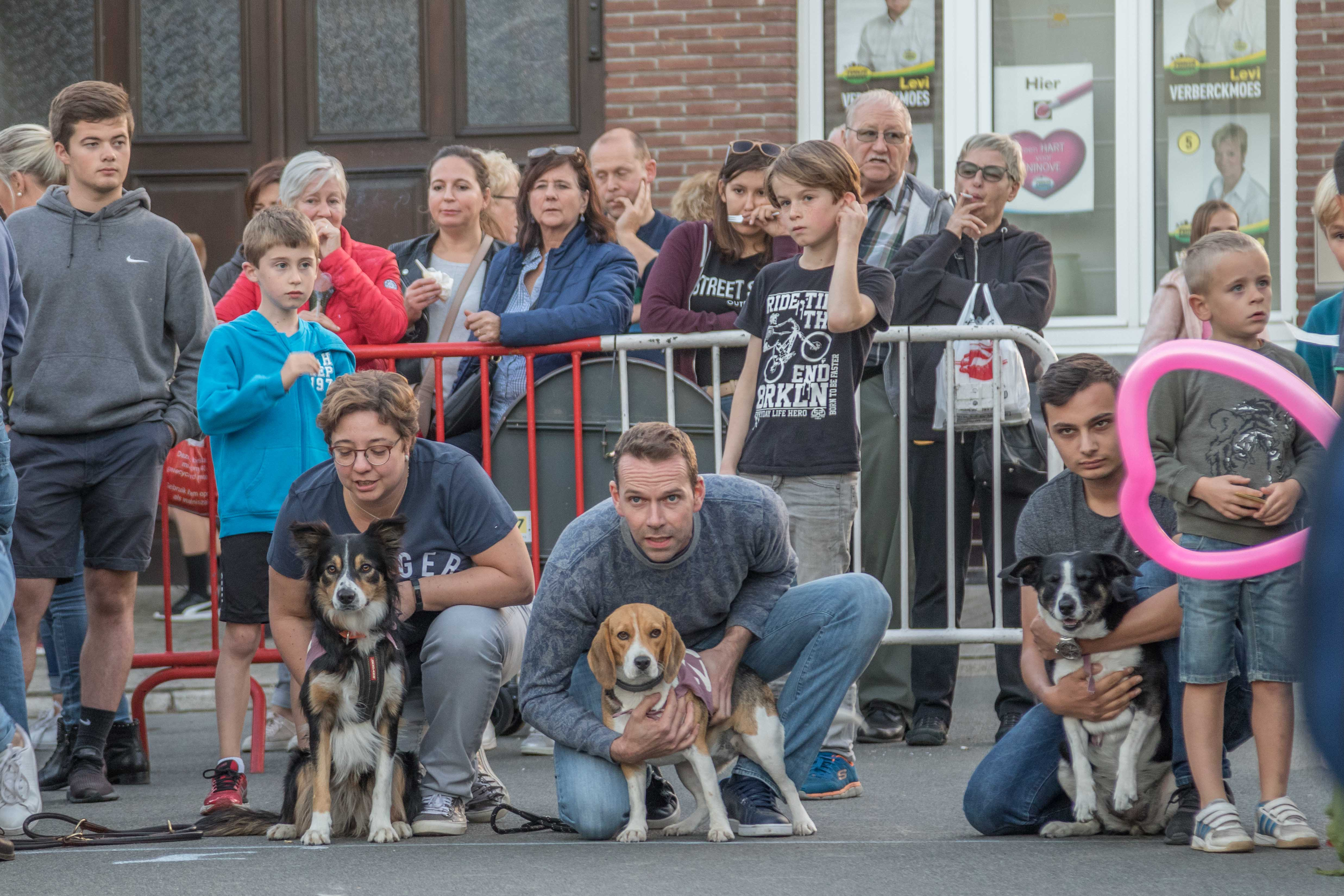 93ste hondenkoers te Appelterre-Eichem